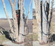 bowser575-tree